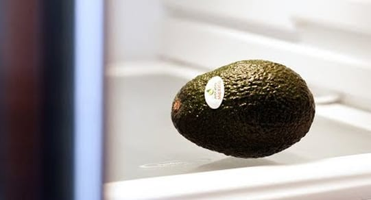 Avocado in refrigerator